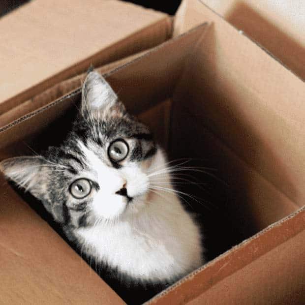 Consejos para hacer una mudanza internacional Trasladar mascotas