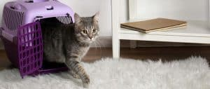 Como hacer una mudanza con gatos